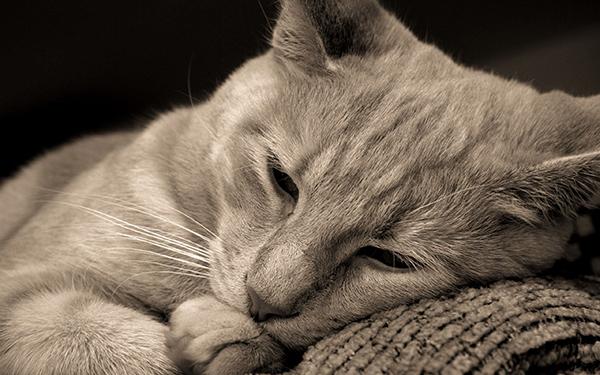 Animal Triste - Depressão Animal