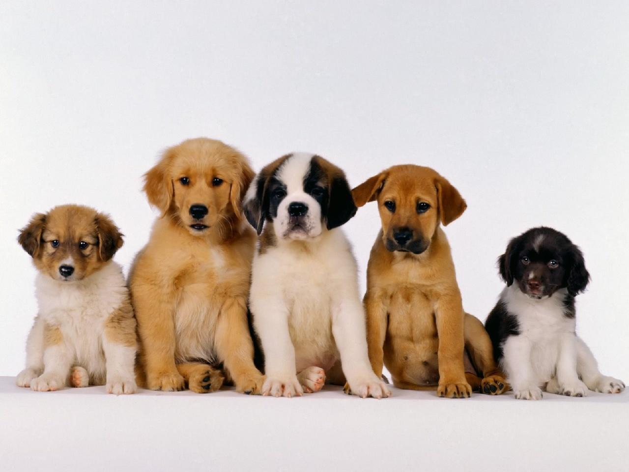 fotos-de-cachorros3