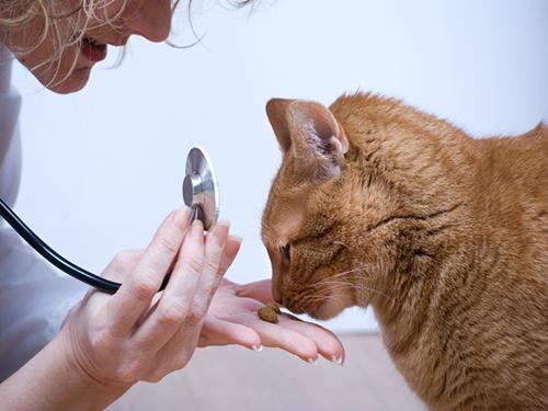 Doenças de Gatos mais comuns