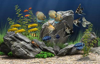Peixes Ornamentais de Água Doce