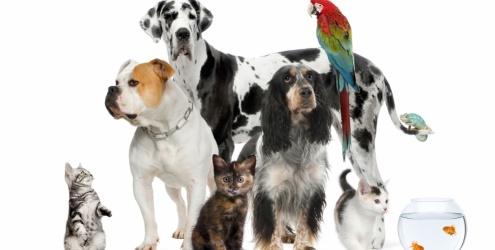 Varios Animais de Estimação