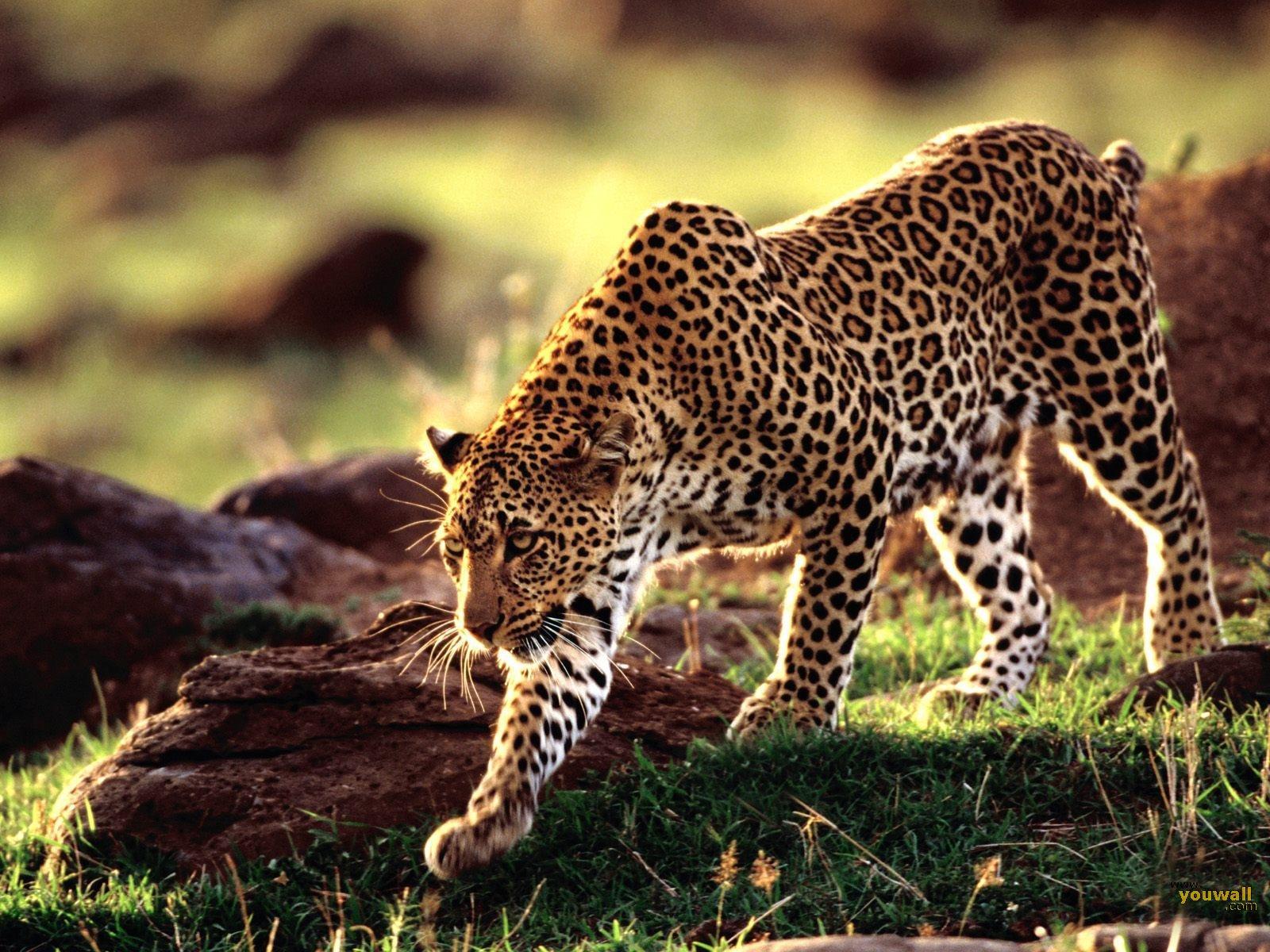 animais do pantanal conheça os 6 mais famosos e suas características