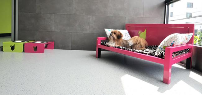 Hotel para Cachorros
