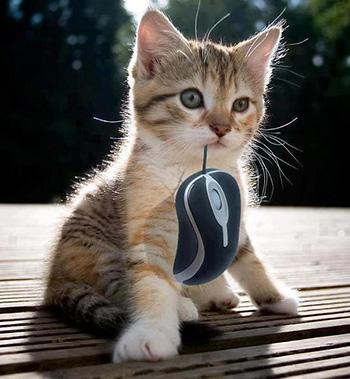 Nomes de Gatos