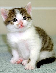gatocc