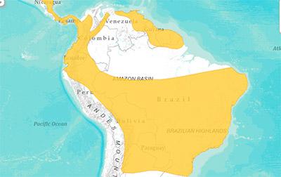 Tapiti Localização 2