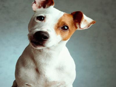 Cachorro filhote fofo