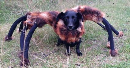 Cachorro Aranha Mutante