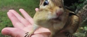 Esquilo Dramático
