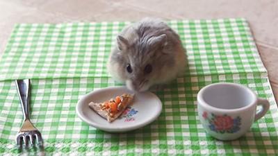 Hamster Minúsculo