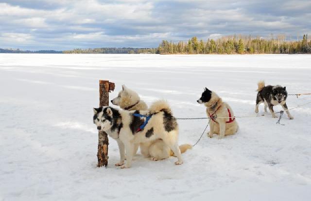 Esquimó canadense